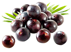 Acai Berry Weight Loss Supplement
